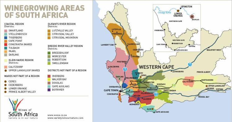 vignoble-sud-africain